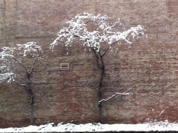 snow big 3